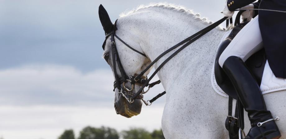 Reitsport, Pferde Artikel, Futtu